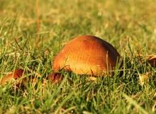Mushrooms DF