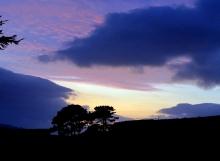 sunset nov 13 trees